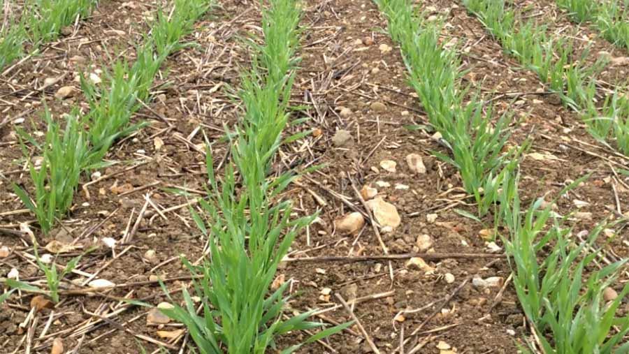 Crop rows