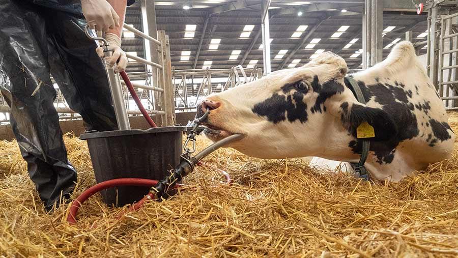 cow oral pump for fluids