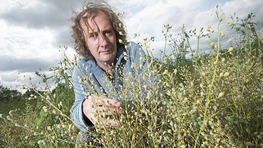 Rothamsted's Professor Jonathan Napier with a small crop of GM Camelina © Shutterstock