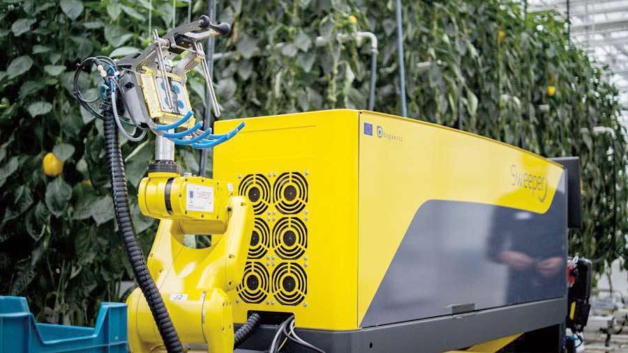Robot pepper harvester