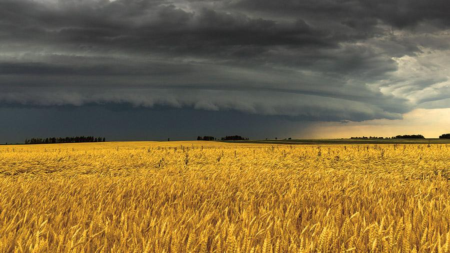 Crop with dark sky