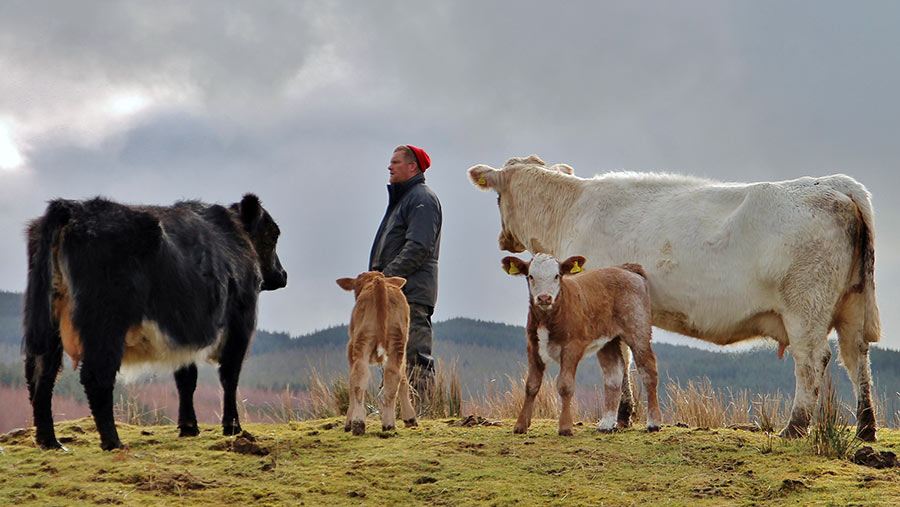 Farm Manger with cows