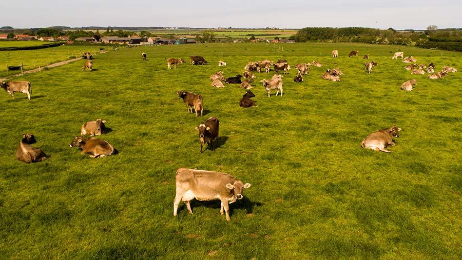 Cattle in a field at Copys Green Farm