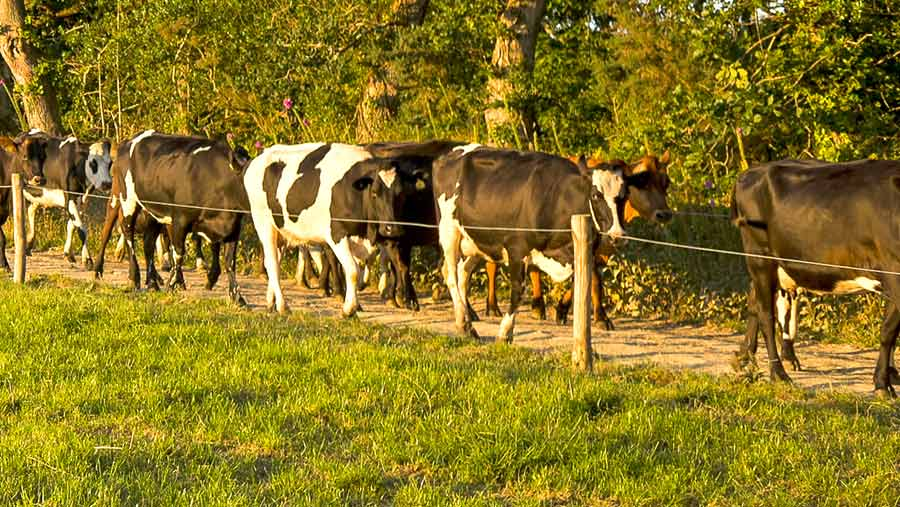 Callestick ©  Farm Cornish Ice cream