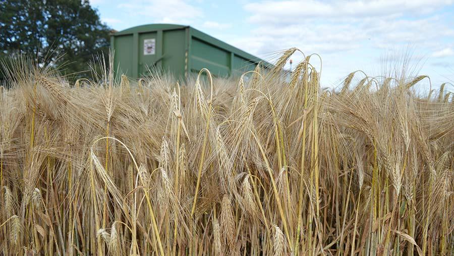 Winter barley harvest
