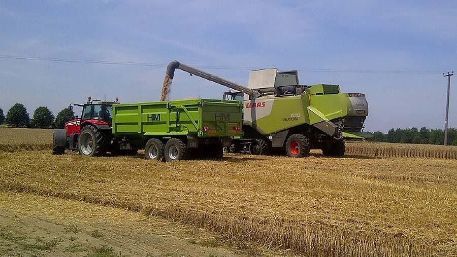 Mr White's wheat crop