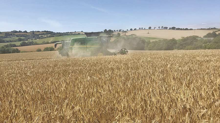 Harvesting barley at Howton Farm in Cornwall