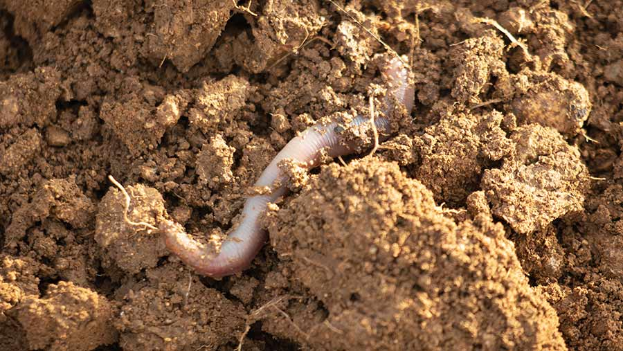 Soil structure and worms
