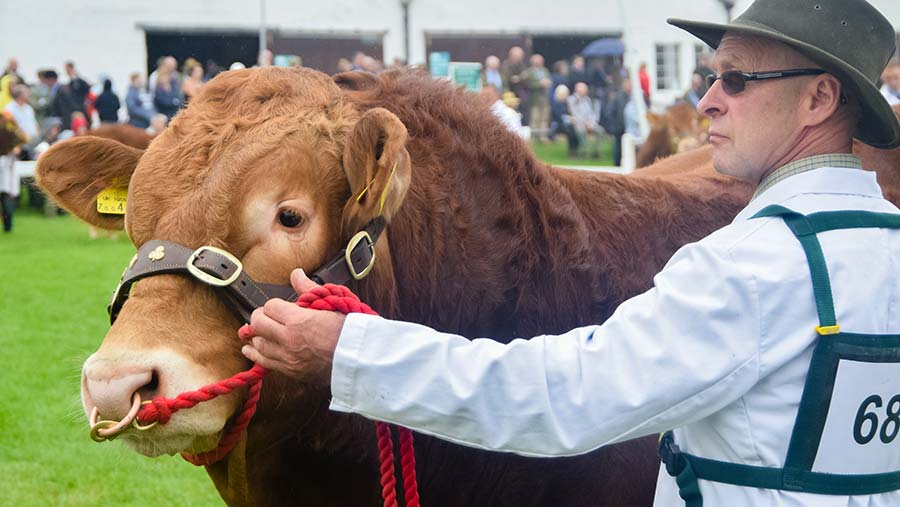 Willie Barron © British Limousin Cattle Society