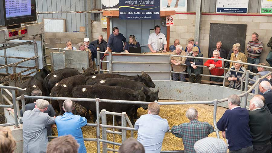 A Wright Marshall livestock auction © Tim Scrivener