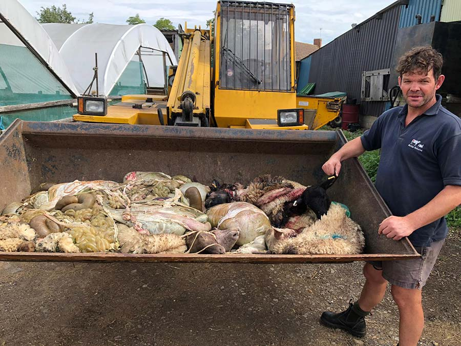 Patrick Green with the remains of the butchered sheep in a metal container