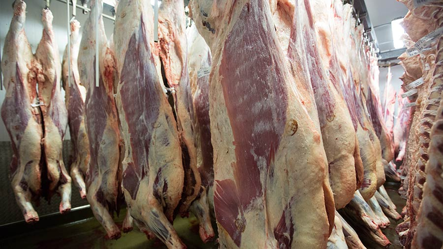 Beef carcasses hanging in a chiller