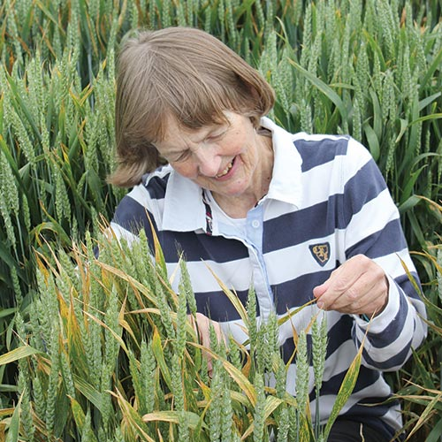 Rosemary Bayles checks Agrii tussock plot for yellow rust