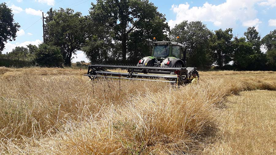 Honey Bee swather at work in field