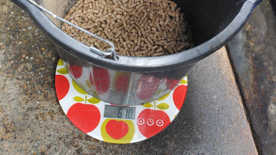 Bucket on scale with feed in