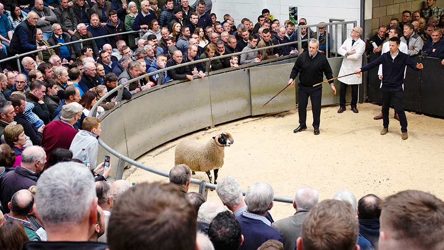 The Blackwoods led the sale with a son of the £160,000 Elmsclegh lamb