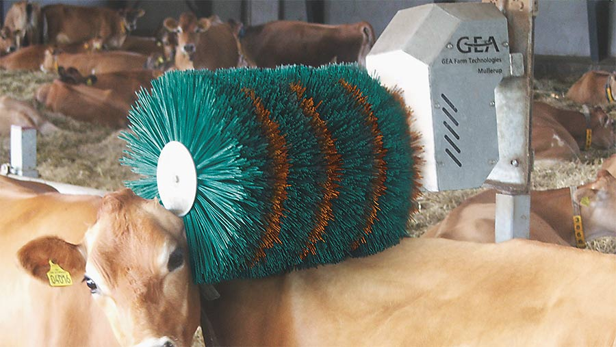 Cow using GEA brush