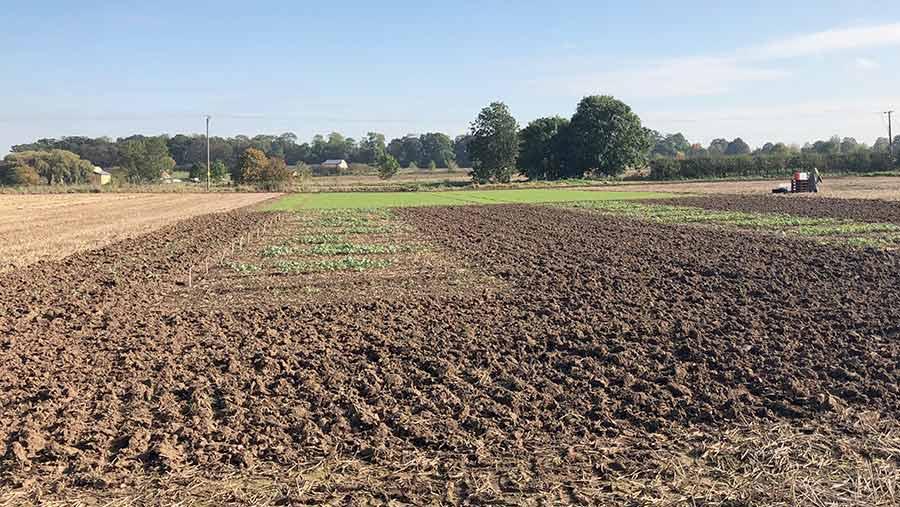 Crop plots