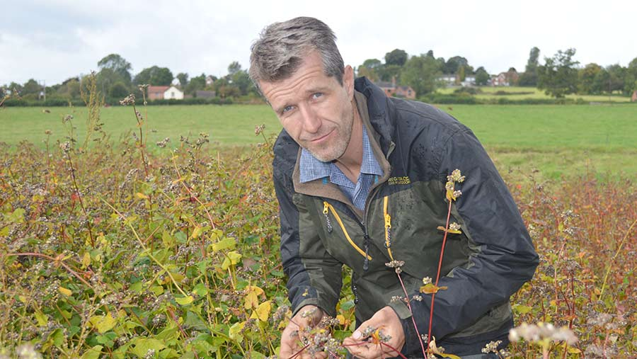 Mark Lea with a trial buckwheat crop