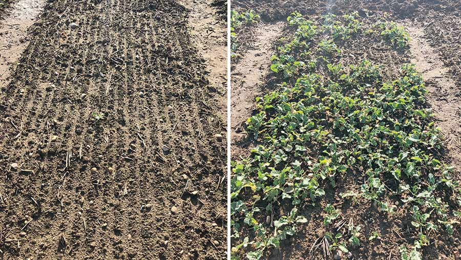 Untreated crop (left)  v treated crop (right)