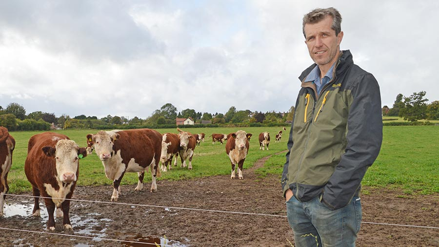 Mark Lea with his cattle