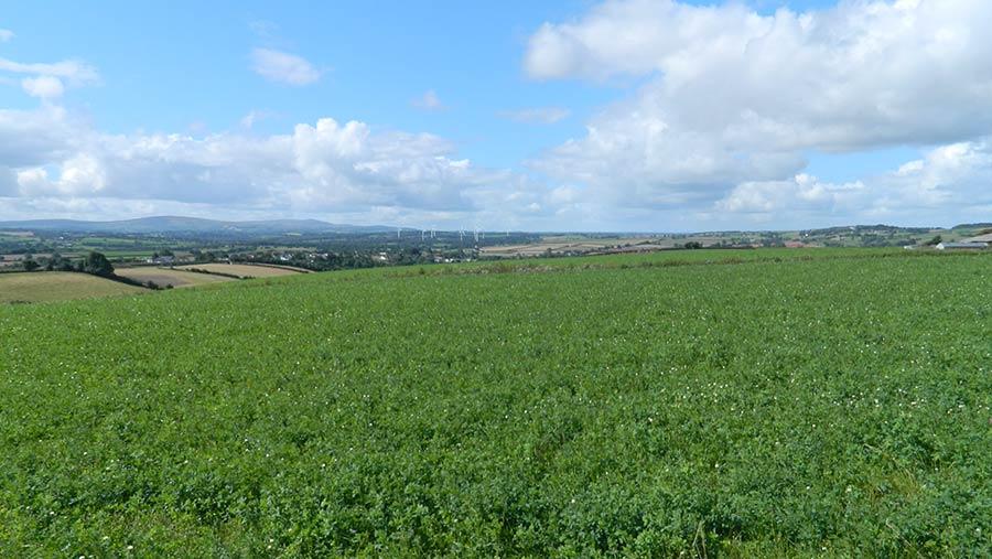 Arable land at Clannaborough Barton