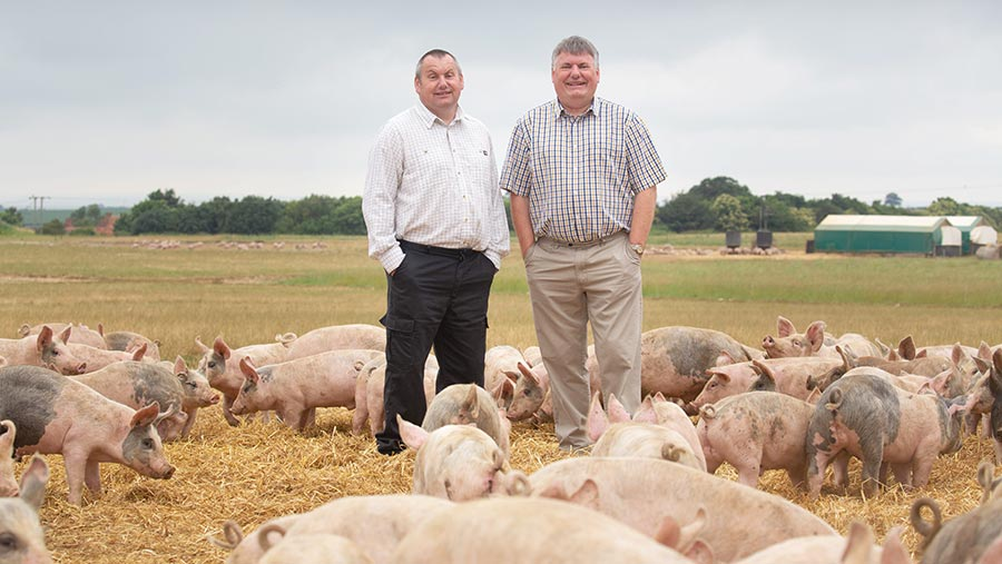 Michael and Ian Baker in a field with pigs