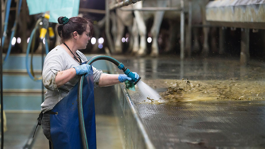 A woman uses a hose to clean a dairy floor