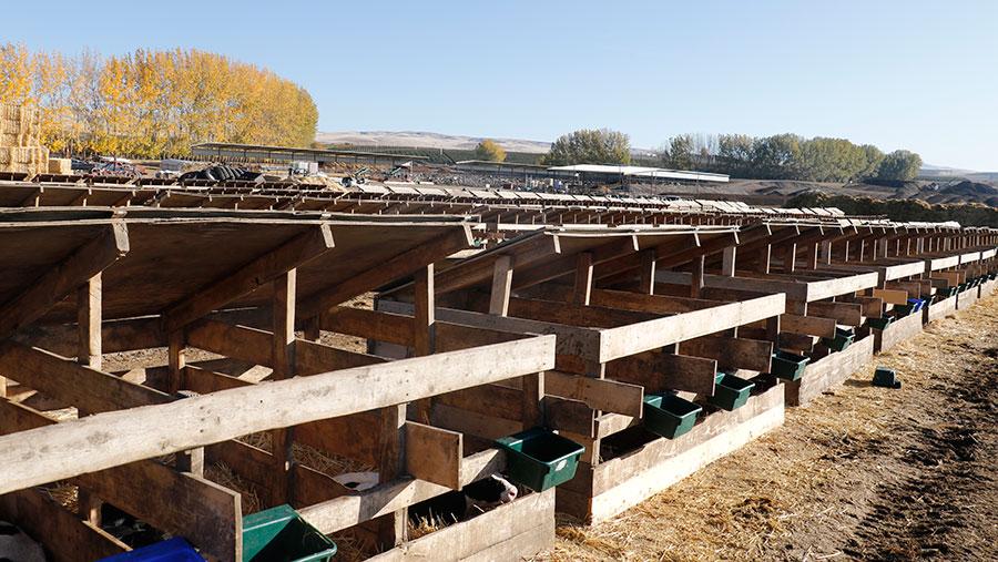 Calve sheds
