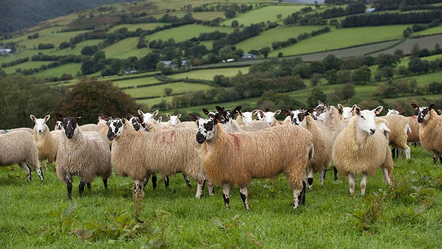 Welsh farmers rely on BPS to make a profit, survey shows - Farmers Weekly