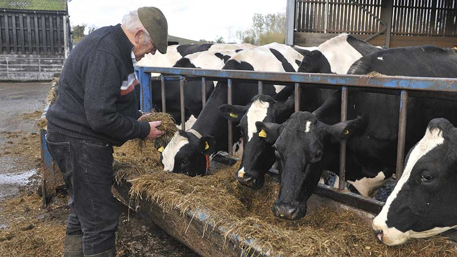 Hugo Edwards with cows eating silage
