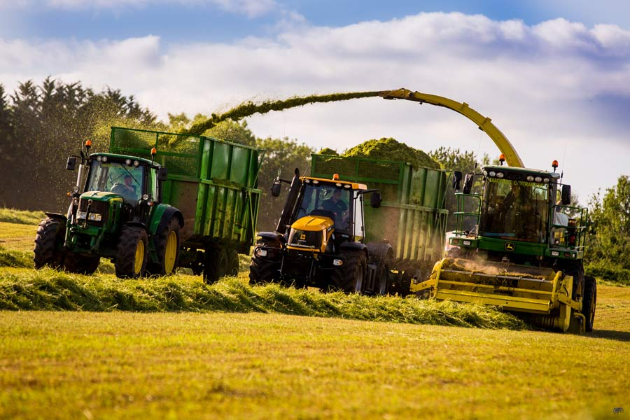 Silaging in a field