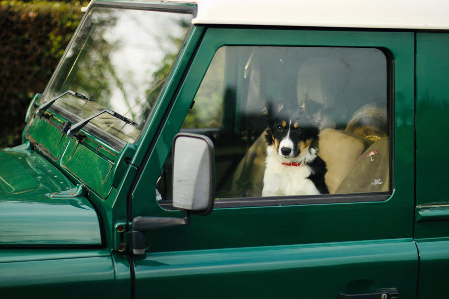 Dog sitting in window of Land Rover