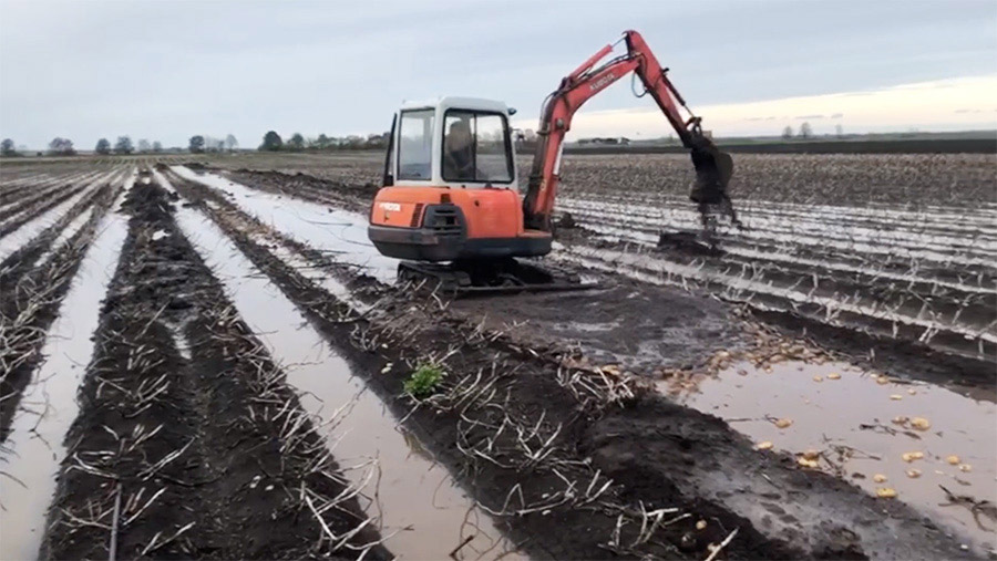 Farmer digs out potatoes with digger in flooded field