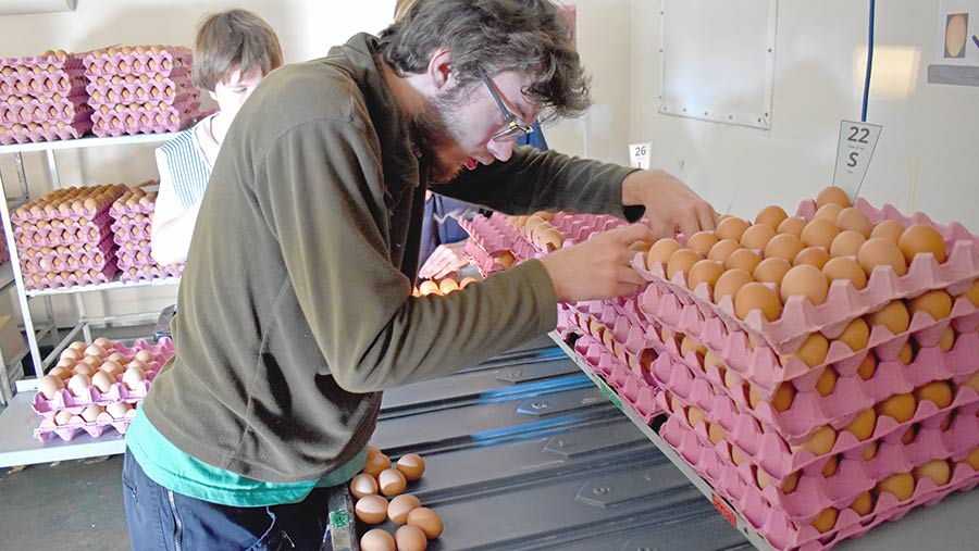 Man packing eggs into a crate