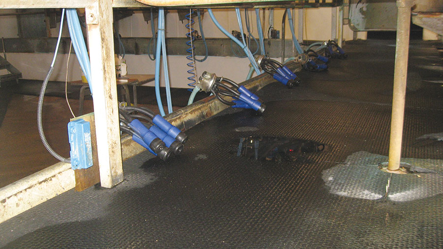 Milking clusters in parlour