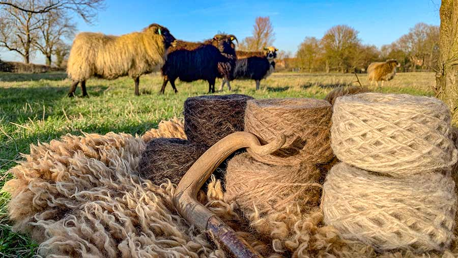 Wool and fleeces with sheep in background