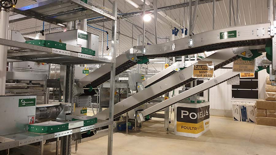Egg packing and processing unit