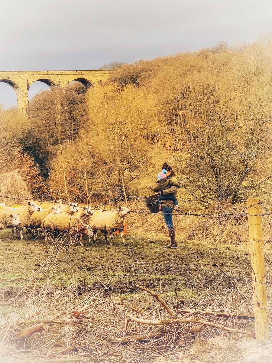 Baby and mum feeding sheep in field