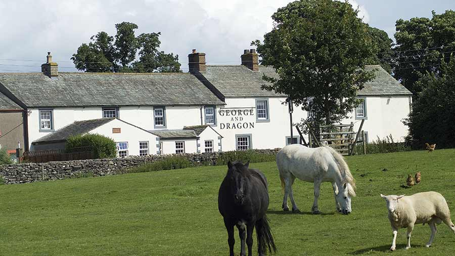 Horses and sheep in front of the George and Dragon pub