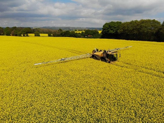Ripe oilseed rape crop at the Budd's farm