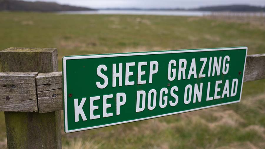 Sign on a fence reads: Sheep grazing keep dogs on lead