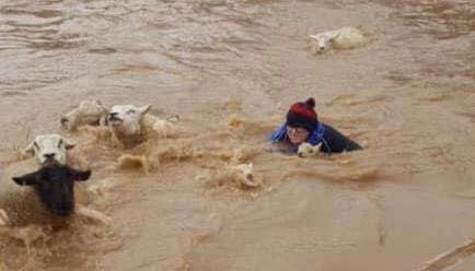 Woman rescuing sheep from water