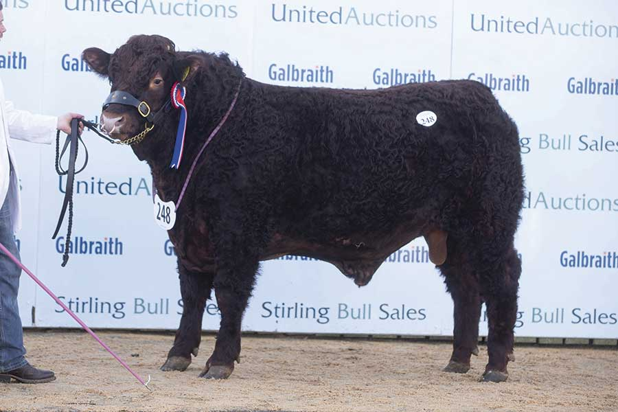 Sales bull Cumbrian Nadal Poll