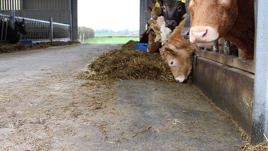 Sloping floor helps stop cows pushing feed back.