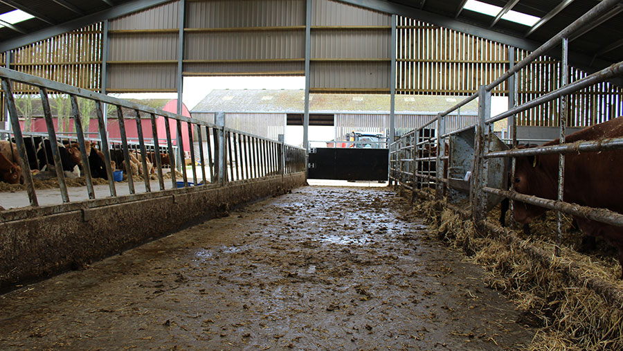 Multiple gates in each pen allow cows to be shut back and the passage to be easily scraped out.