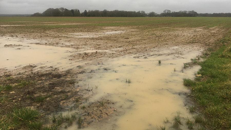 Waterlogged field
