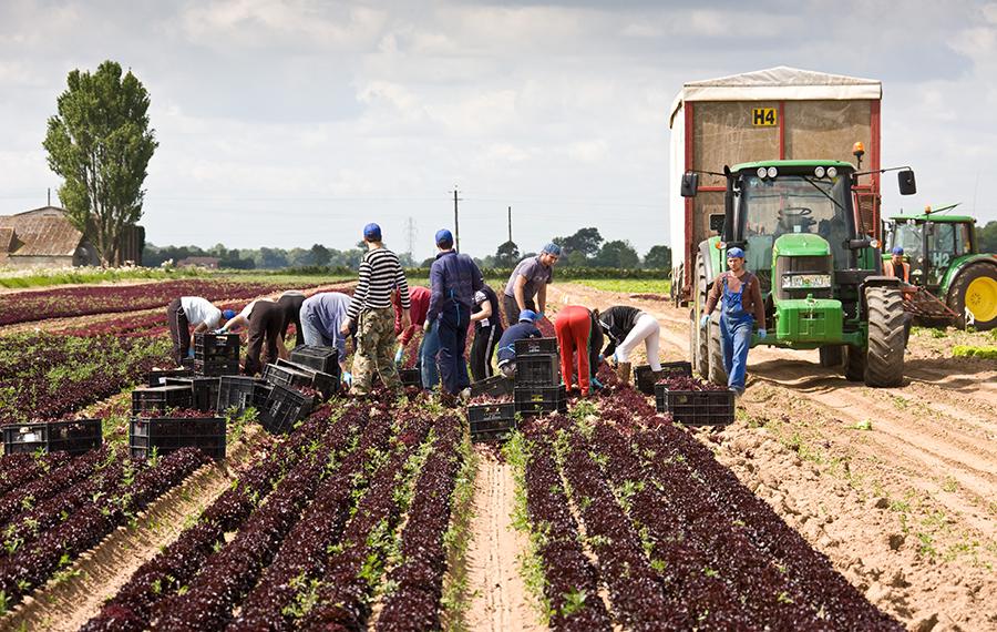 Coronavirus How To Find Seasonal Work On Farms Farmers Weekly