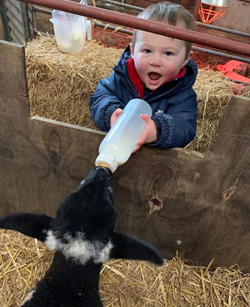 Child feeding lamb with bottle