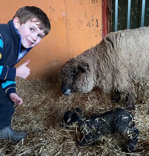 Boy with ewe and lamb